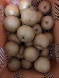 福島県産 新高梨3kg りんご2Kg ご家庭用