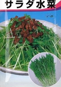 超おいしい!家庭菜園・園芸ガーデニング「水菜(ミズナ)の種」一袋 栽培しやすい非売品