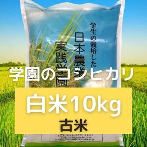 農業学校の学生と作ったコシヒカリ【古米】精米したて白米10kg 令和2年産