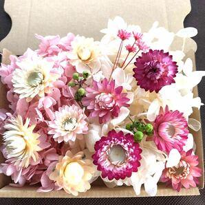 ヘリクリサム ピンク系 花材セット