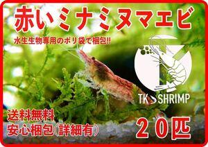 【TKシュリンプ】((送料無料&匿名配送)) 赤いミナミヌマエビ 20匹 (検索用 ミナミヌマエビ チェリーシュリンプ アナカリス メダカ 金魚)