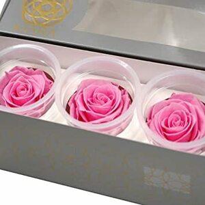 ベビーピンク プリザーブドフラワー IPFA バラ KIARA [ベビーピンク 3輪入り] 花材 (LLサイズ 約6-6.5cm