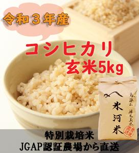 新米 令和3年産 氷河米 コシヒカリ 玄米5kg 山形県 庄内産 送料無料!