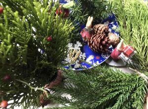 クリスマス素材コニファー、杉、松ぼっくり 宅急便コンパクトにいっぱい