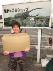 【世界の昆虫ショップNESiA】エナジーパワーマット50L【カブトムシ用マット】