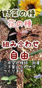【秋蒔き・自然農あり】野菜の種 花の種 家庭菜園○プランター○