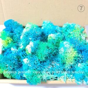 加工花材* ⑦珊瑚風 モス プリザーブドフラワー 海 ハーバリウム 花材