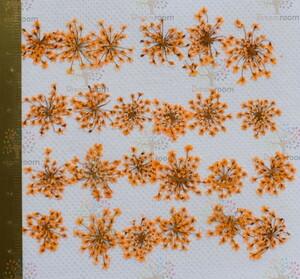 押し花 素材 ドライフラワー リーフ クラフト レジン DR202-O 押し花 レースフラワー オレンジ