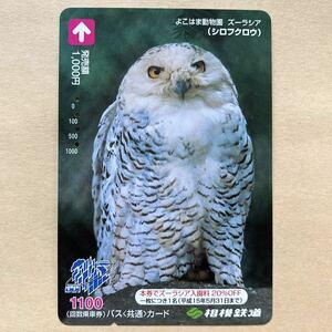 【使用済】 バスカード 相模鉄道 相鉄 シロフクロウ よこはま動物園ズーラシア