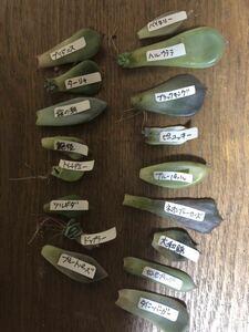 多肉植物 バラエティ葉挿しセット