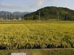 即決  農家直送  令和3年兵庫県産 新米コシヒカリ  玄米30kg。