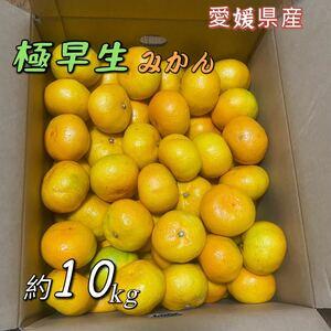 極早生みかん 愛媛県産 約10kg Lサイズ JA全農えひめ 蜜柑