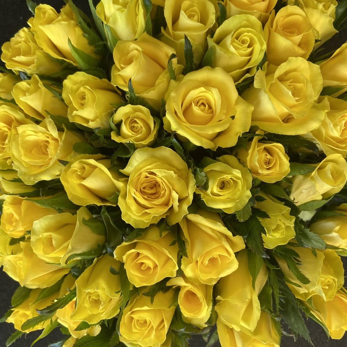 バラ (切り花・生花)ゴールドラッシュ(鮮やかな黄色)20㎝ 70本 鮮度抜群・産地直送!