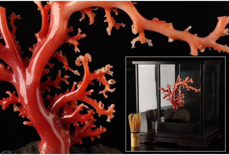 [URA]天然珊瑚拝見/4-j-316(検)骨董/サンゴ/コーラル/置物/飾り物/原木/血赤珊瑚/古玩/唐物