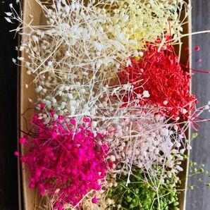 ミニかすみ草8色詰合せ プリザーブドフラワー 花材 ハンドメイド アクセサリー小花  かすみ草 ハーバリウムボールペン サシェ