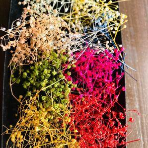 ミニかすみ草8色詰合せ プリザーブドフラワー 花材 ハンドメイド 小花 かすみ草 ハーバリウム花材 サシェ
