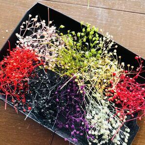 ミニかすみ草8色詰合せ プリザーブドフラワー 花材 ハンドメイド アクセサリー小花  ハーバリウム花材 ア サシェ