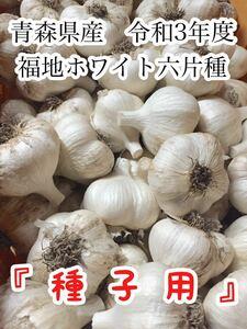 青森県産にんにく 福地ホワイト六片種 令和3年 ニンニク 種子用 1キロ Lサイズ 新物 土付き