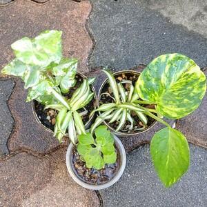 観葉植物 セット