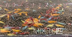 残り僅か! カラーミナミヌマエビ 10匹 赤いミナミヌマエビ ミナミヌマエビ チェリーシュリンプ アナカリス メダカ 金魚 水草