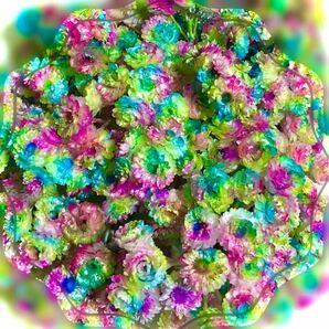 ( キラキラ・イモーテル/mix・Rainbow/100粒!) 加工 ハーバリウム ドライフラワー 花材