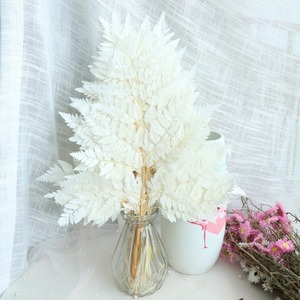 フラワーアレンジメントに●シダ 葉 ドライフラワー 乾燥 自然 天然 おしゃれ 神秘的 植物 アクセント インテリア おしゃれ 装飾DJ1470
