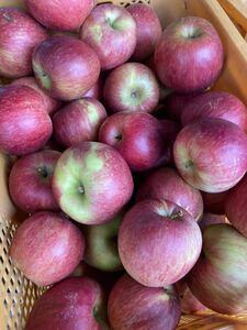 k6.福島県産梨3kg シナノスイートリンゴ3kg ご家庭用