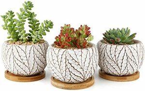 北欧風 T4U 10CM セメント製 植木鉢 おしゃれ プランター 多肉植物鉢 サボテン鉢 竹製受け皿付き 底穴ある 小型植物適