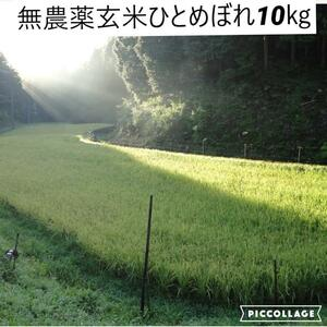 令和3年度新米【湧き水栽培】無農薬玄米ひとめぼれ 10㎏ 奈良の農家直送