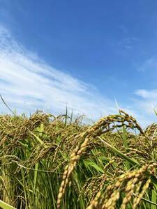 新米!令和3年度米/石川県能登産こしひかり/精米20kg 世界農業遺産認定地域