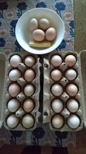 白烏骨鶏 卵10個(割れ保障2個含む) 有精卵 うこっけい 有精卵 孵化用・食用 産みたて 高栄養 格安 お買い得 売り切り 今だけ早い者勝ち