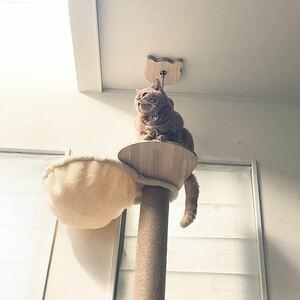 キャットタワー 木登りタワー シングル 省スペース 全麻縄巻きおしゃれ猫タワーキと替えハンモックセット