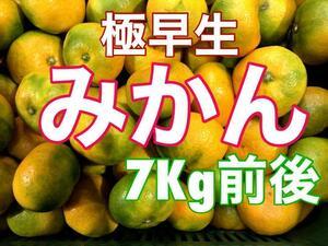 YK7M3 大特価!愛媛県産 極早生みかん 約7Kg前後 訳あり 蜜柑
