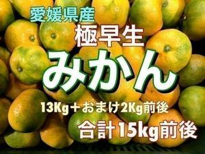 Y3 大特価!愛媛県産 極早生みかん 約15Kg前後 訳あり 蜜柑