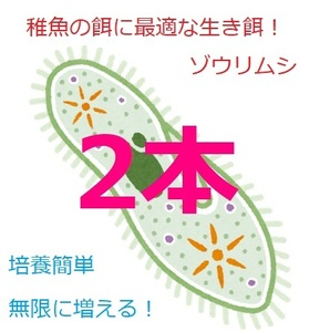 ★ゾウリムシ 種水 メダカ グッピー ベタ 稚魚 針子 餌 超濃縮 タレビン 48ml×2本★
