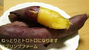 サツマイモ 紅はるか家庭用Sサイズ茨城県13㌔あえて土付減農薬栽培安納芋以上甘さ 農家直送便
