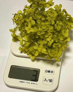 1☆ソフトアナベル・ヘッド グリーン3g ハーバリウム プリザーブドフラワー ドライフラワー ハーバリウム花材 大地農園