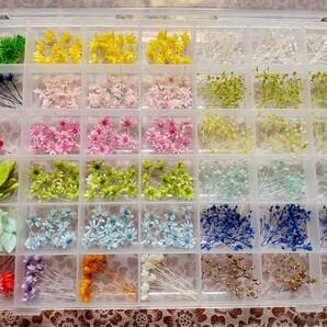 42仕切りケース入り ハーバリウム 花材 アソート 詰め合わせ お試しセット スターフラワーミニ ソフトミニカスミ草 42種類