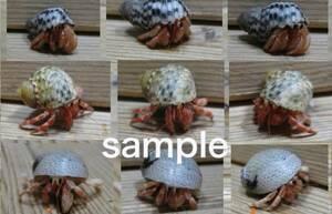 Okaya Dokari red. Thin pink cute mini size 3 sets (2)!