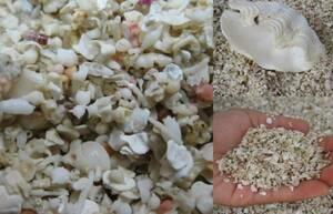 オカヤドカリ用 上質@砂! 3kgセット(天然海水付き)