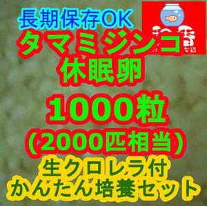 タマミジンコ休眠卵1000粒+粉末生クロレラ付★長期保存★めだからんちゅうグッピーの餌ゾウリムシブラインシュリンプ代替93