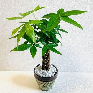 ハイドロカルチャー パキラ 編み込み 小鹿田焼 飛びかんな 陶器 観葉植物