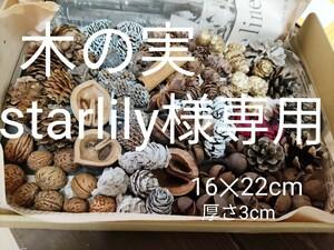 starlily様専用 人気の 木の実 アソート 15種 約500個  ネコポス リース ディスプレイ