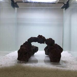 ☆sea tree☆ミニ水槽にオススメ♪ アクリル板施工済み溶岩石 12流木/水槽/アクアリウム/テラリウム/インテリア/ADA/サンゴ/置物/