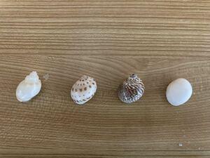 Beautiful Yadkari Shell 4 types of shell size 20mm