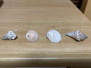 Four types of shells for beautiful yadkari