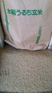 令和3年度 無農薬 新米■長野県 飯山市【信州・飯山産】コシヒカリ 玄米30kg■低温貯蔵■発芽します