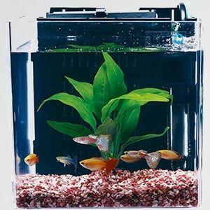 未使用 新品 (Tetra) テトラ I-JO 水槽 アクアリウム スマ-ト熱帯魚飼育セットSP-17TF (水槽容量 5L)