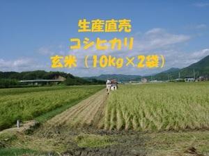 令和3年産新米 コシヒカリ玄米20kg (10kg×2袋) 白米に精米と分搗き精米対応