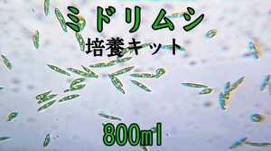【活き餌】ミドリムシ(ユーグレナ) 培養キット800ml 送料無料